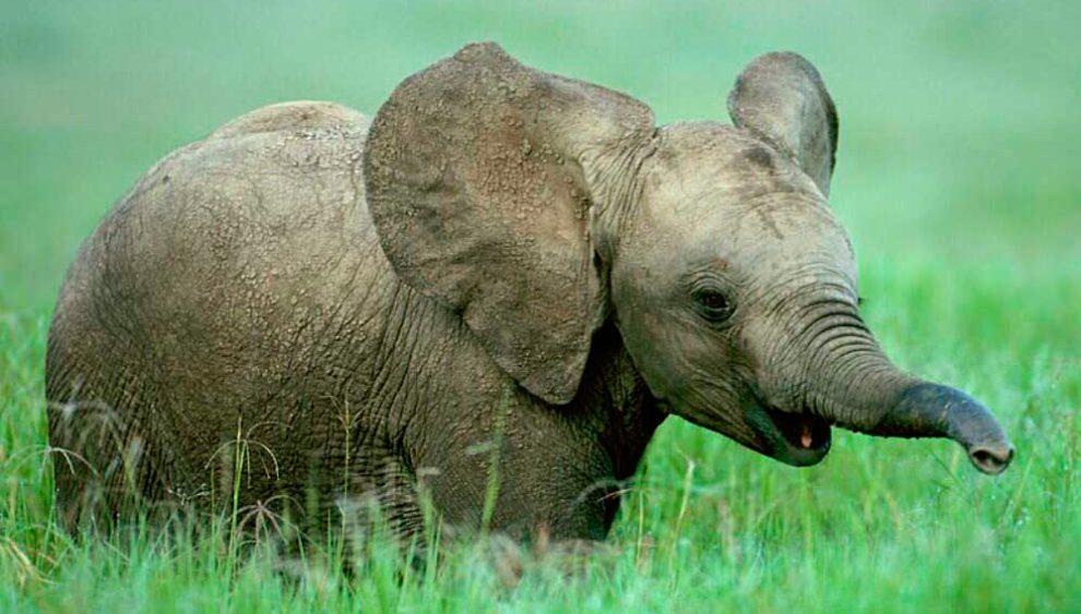 Beb s elefantes - Fotos de elefantes bebes ...