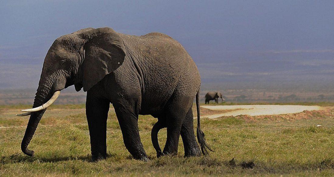 Elefantes de África :: Imágenes y fotos