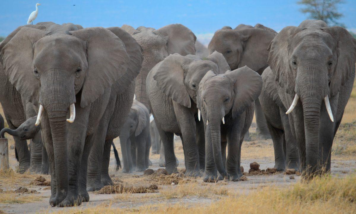Estructura Familiar De Los Elefantes