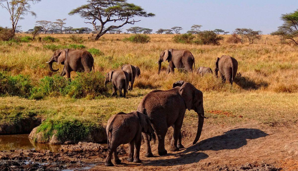 Dating botswana un habitat
