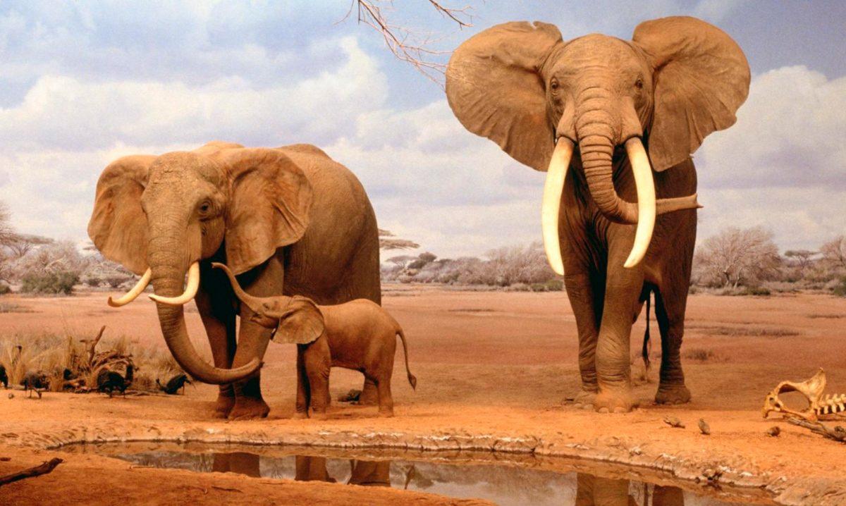 Galería De Imágenes Hábitat De Los Elefantes