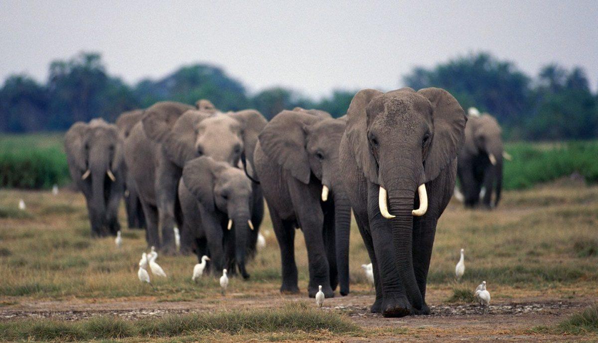 Manada de elefantes :: Imágenes y fotos