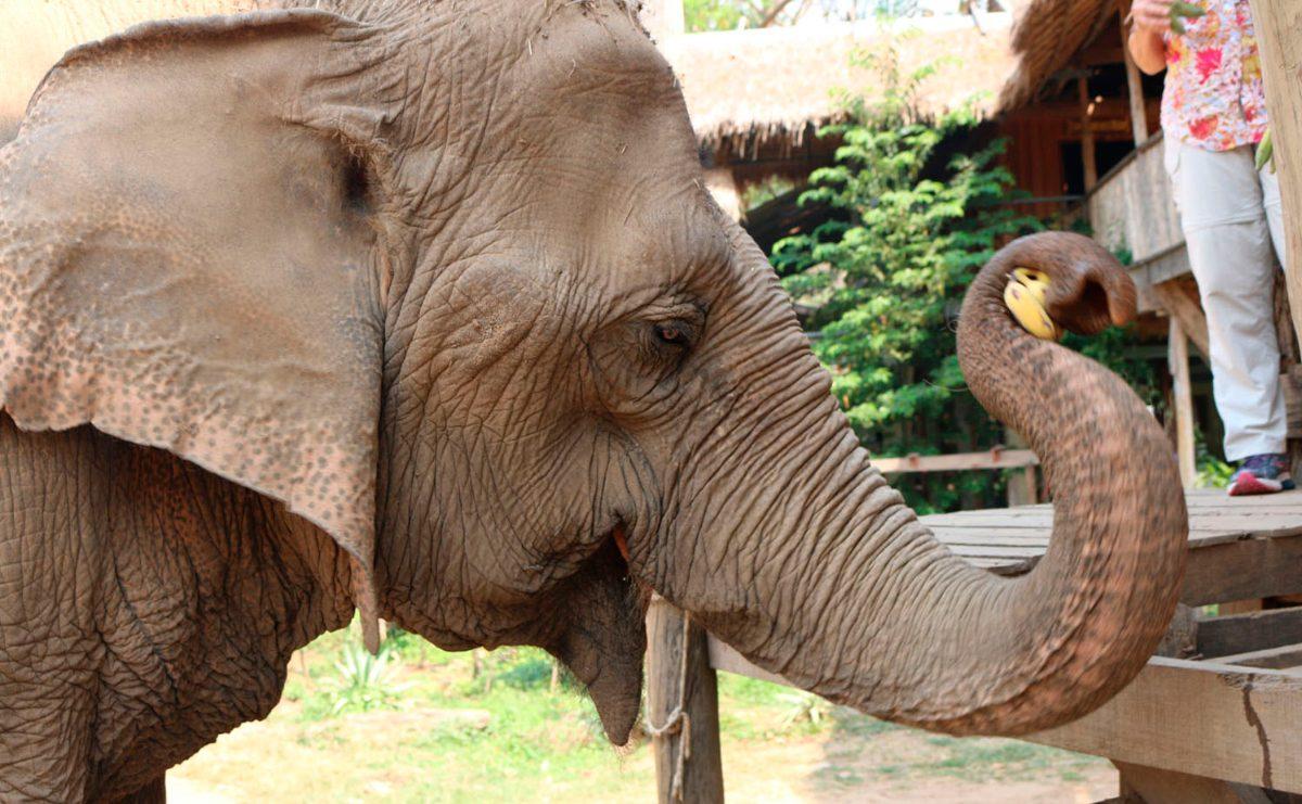 Memória dos elefantes