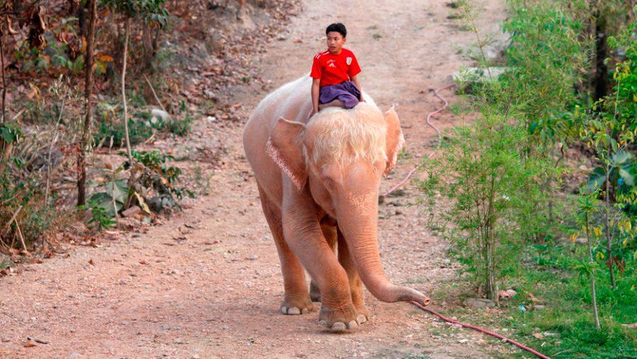 Significado De Los Elefantes Blancos